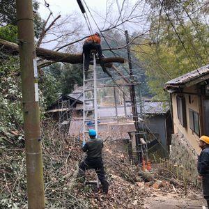 障害木の伐採